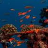 Få dit helt eget PADI dykkercertifikat i dag