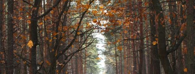 En efterårstur i skoven
