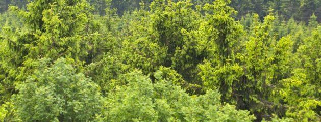 Storbysferie eller en tur ud i naturen? Se mere her